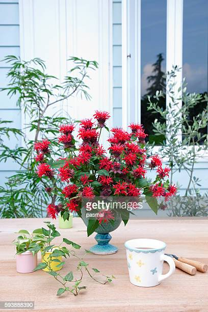 Wild Bergamot in a vase and Tea cup on table