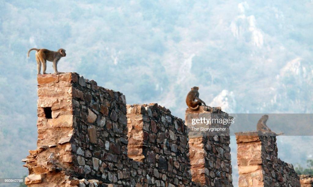 Wild Bhangarh : Stock Photo