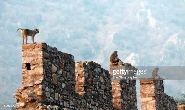 wild bhangarh - the storygrapher stock pictures, royalty-free photos & images
