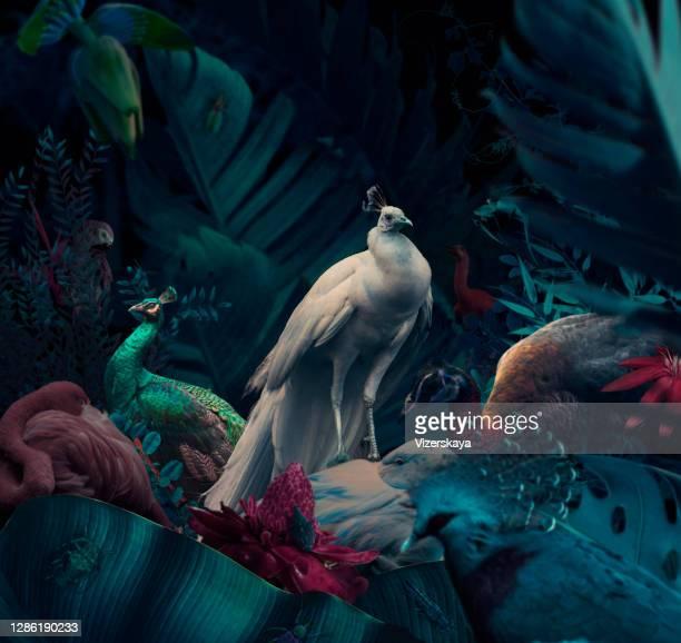 pássaros selvagens na selva noturna - peahen - fotografias e filmes do acervo