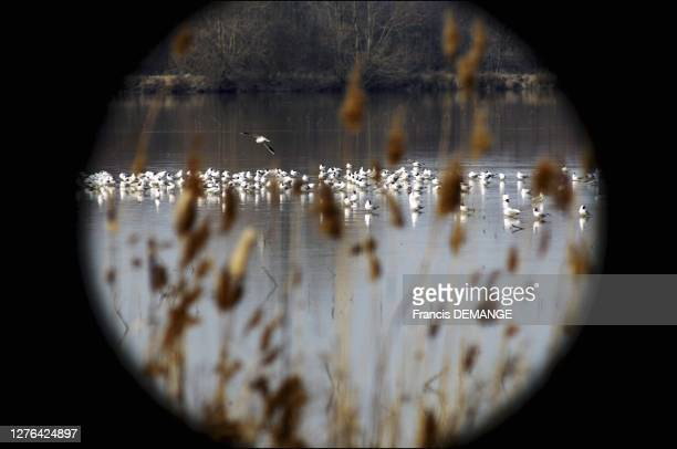 Wild birds in the Dombes, Ain department are under close watch. Since the beginning of the epidemy, dozens of dead birds are brought by ONF agents to...