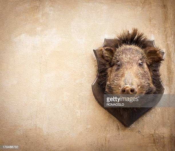 Wild boar on a wall in Volterra, Tuscany Italy