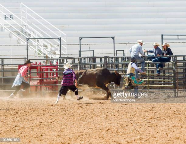 wild bull riding competition at rodeo