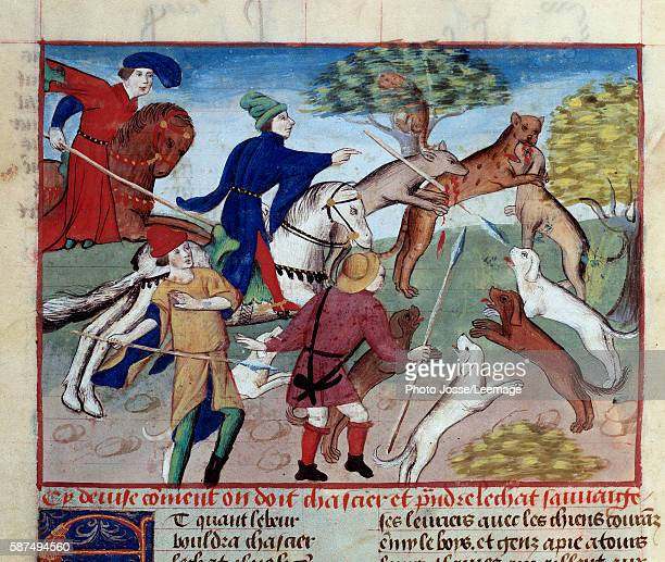 Wild cat hunting Miniature from 'The Book of the Hunt' by Gaston III Phoebus Count of Foix Lord of Bearn 13871388 Conde Museum Chantilly France