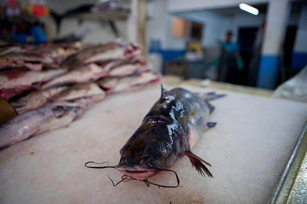Photos et images de Fish Sold at a Wholesale Market in