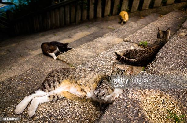 Wild cats having a rest