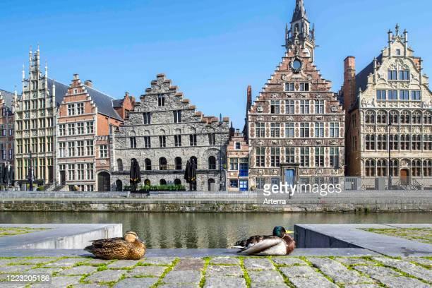 Wild duck couple resting in the deserted Flemish city Ghent due to the 2020 COVID-19 / coronavirus / corona virus pandemic, East Flanders, Belgium.