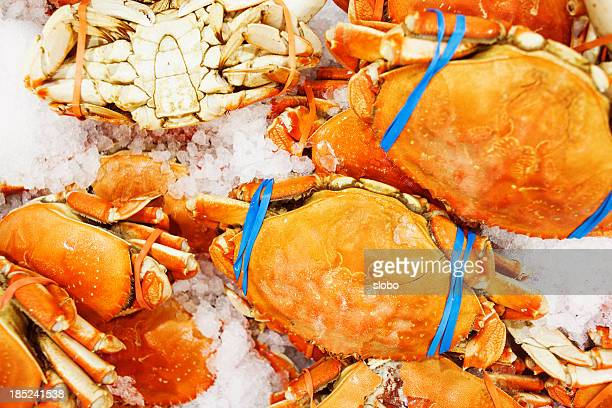 Wild Dungeness Crab On Ice