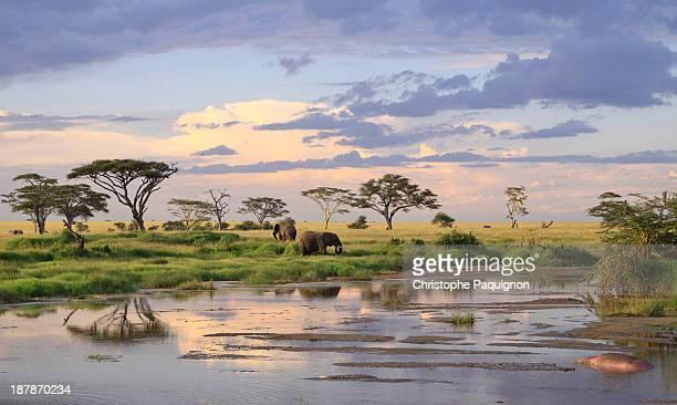 wild elephants - tanzania - tanzania fotografías e imágenes de stock