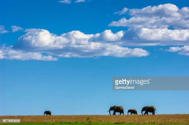 wild elephants walking on a ridge with clouds in background - safari animals stock photos and pictures