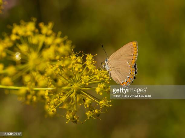 wild fennel flower country house madrid