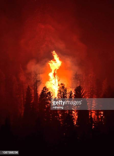 wild fire - forest fire stock pictures, royalty-free photos & images
