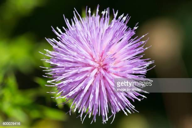 Wild flower close up