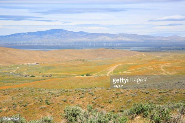 Wild flower field in Antelope Valley California Poppy Reserve
