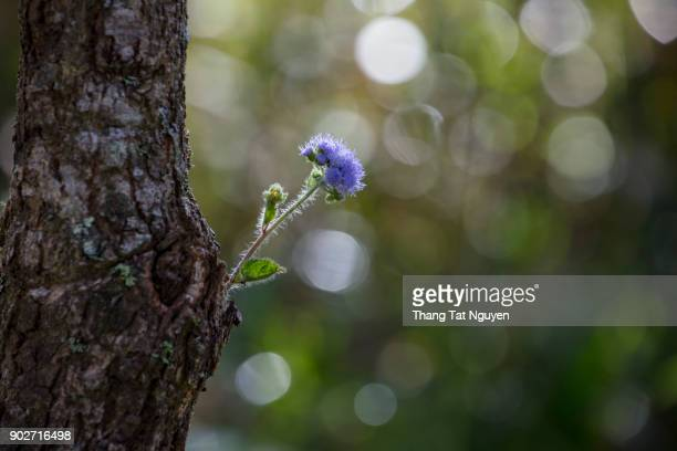 Wild flower on old tree branch