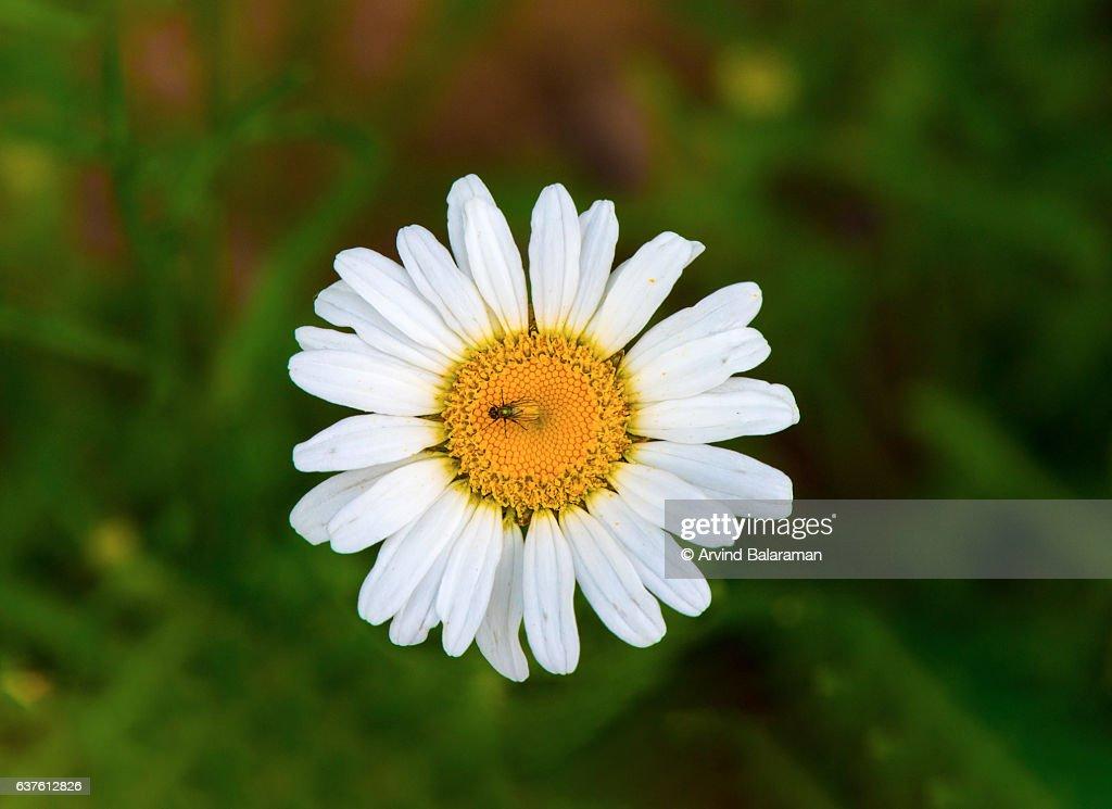 wild flower : Stock Photo
