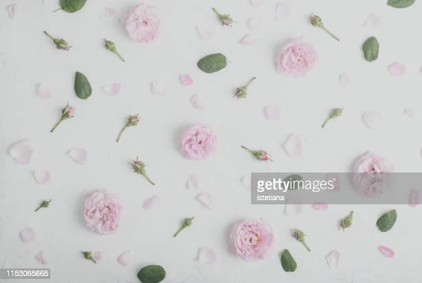 wild flower rose floral background - 花びら ストックフォトと画像