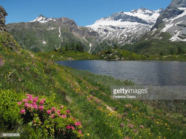 Wild Flowers Along The Shore Of Hopschusee, Simplon Pass