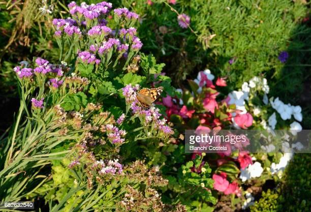 wild flowers and butterfly in summer in the field - mazzi fiori di campo foto e immagini stock