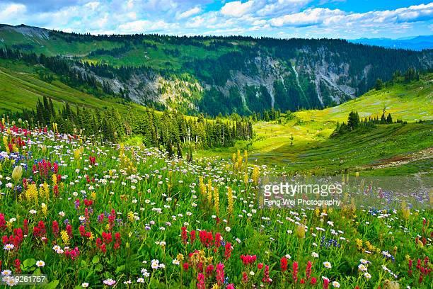 Wild flowers blooming on Mount Rainier