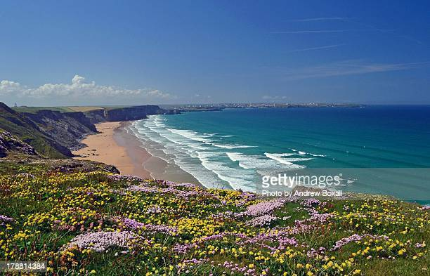 wild flowers cliffs at watergate bay - cornwall england stock pictures, royalty-free photos & images