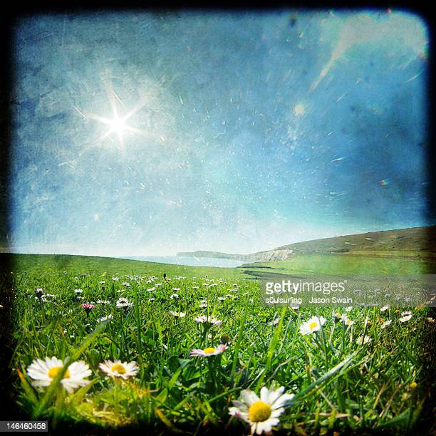 wild flowers field - s0ulsurfing stock pictures, royalty-free photos & images