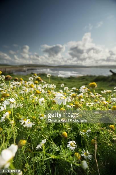wild flowers flowing in the wind - christina luft stock-fotos und bilder
