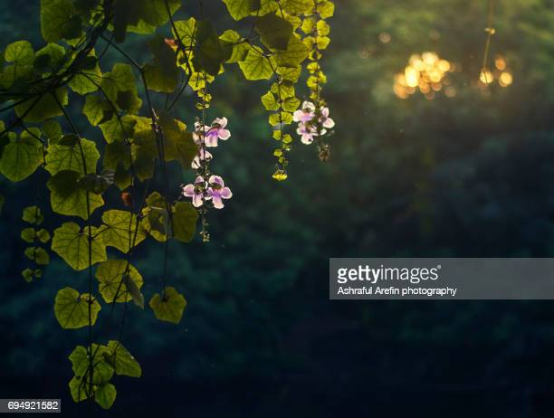 wild flowers illuminated by sunlight - bangladeshi flowers stock pictures, royalty-free photos & images