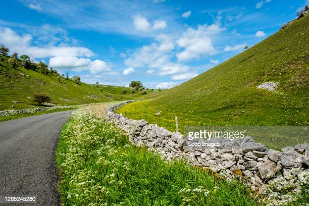 Wild flowers line a road in a dry valley in Derbyshire.