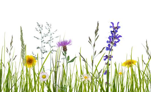 wild flowers on white background 972096240