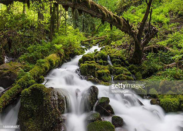 wild forest waterfall idyllic green wilderness - hood river stock pictures, royalty-free photos & images