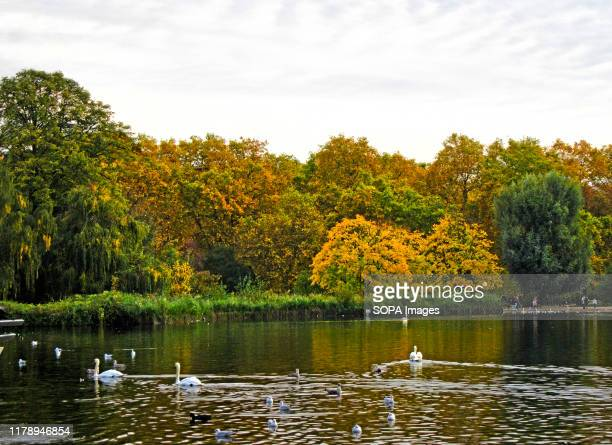 Wild fowl on the Serpentine lake with a background of Trees in London's Hyde Park which give some real Autumn colours to the capital's most famous...
