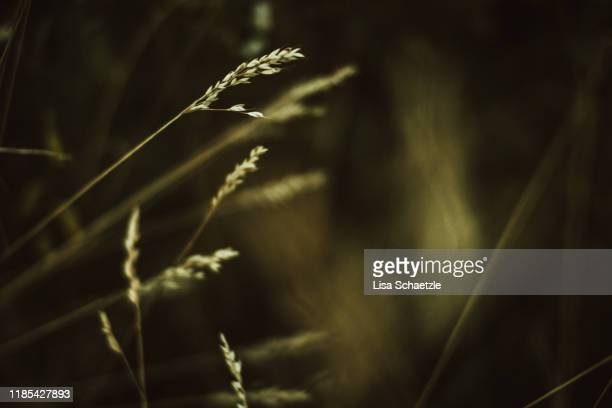 wild garden - blades of grass - background nature - desaturated stock pictures, royalty-free photos & images