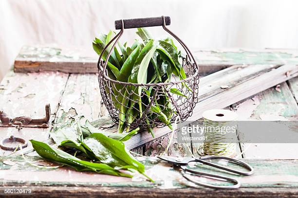 wild garlic, allium ursinum, in wire basket - ail des ours photos et images de collection
