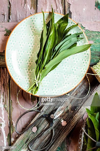 Wild garlic, Allium ursinum, on plate