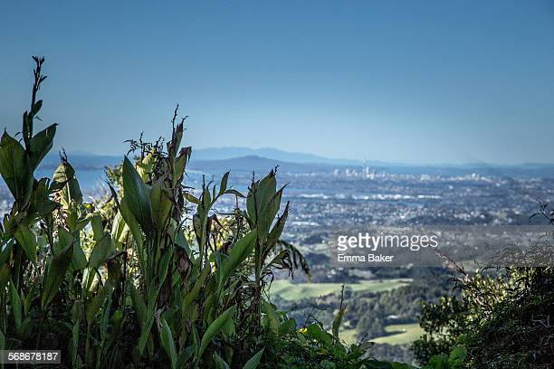 wild ginger with view of auckland in the distance - emma baker stock pictures, royalty-free photos & images