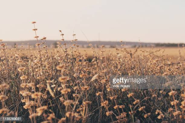 wild grass field - paddock stock photos and pictures