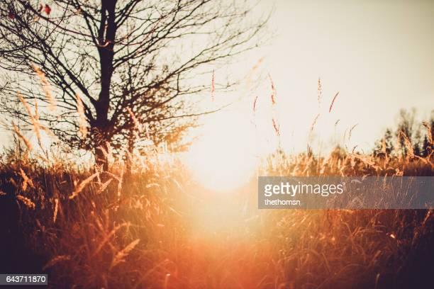 Wild grass plants at super warm sunset light