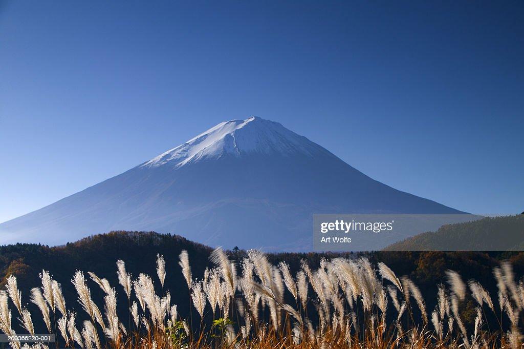 Wild grasses and Mount Fuji, Fuji-Hakone-Izu National Park, Honshu, Japan : Stock Photo
