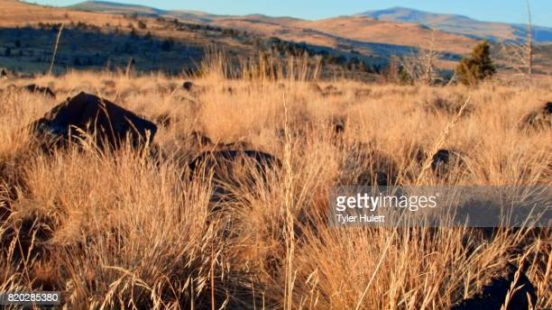 wild grasses at dawn kiger lookout diamond steens mountain near malhuer wildlife refuge 1 - steens mountain stock pictures, royalty-free photos & images