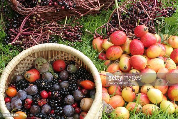 wild harvest - september stockfoto's en -beelden