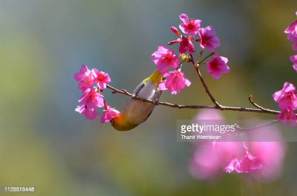 Oriental Flowers Stock Pictures Royalty Free Photos Images