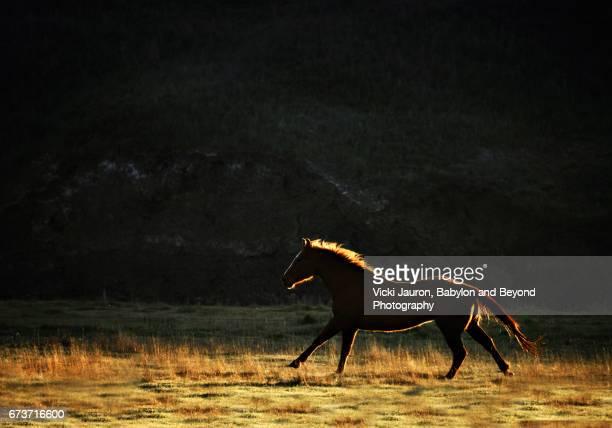 Wild Horse Backlit by Sunrise