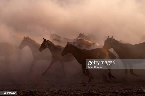 wild horse herd running on a dry swamp, kayseri hurmetci , central anatolia, turkey - animales salvajes fotografías e imágenes de stock