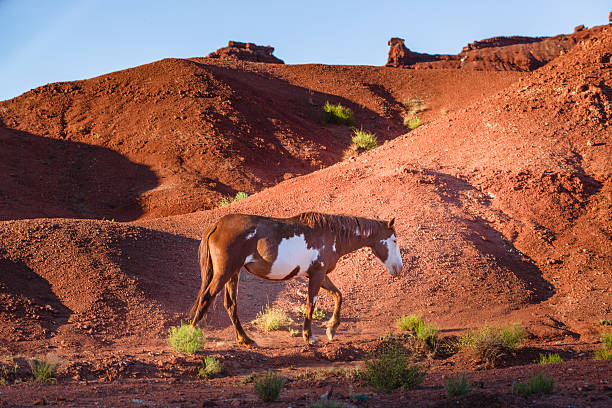 Wild horse in Monument Valley, Arizona