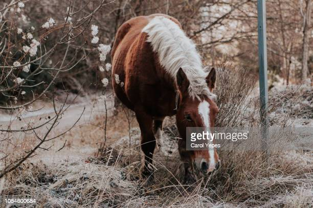wild horse in the mountains - aragon stock pictures, royalty-free photos & images