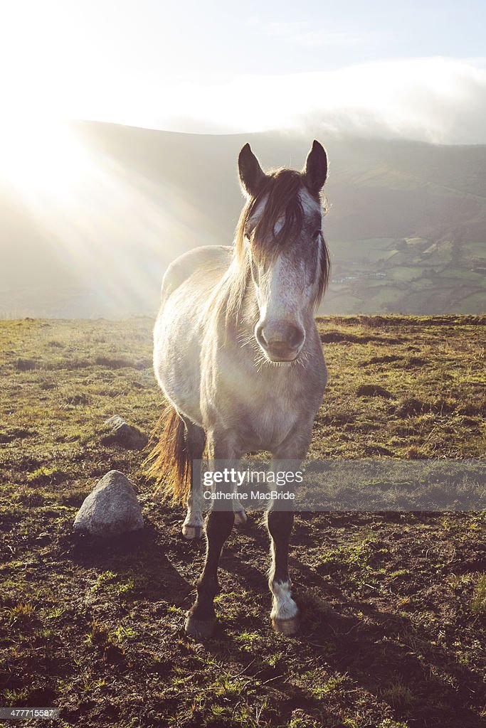 Wild Horse on Wicklow Mountains : Stock Photo