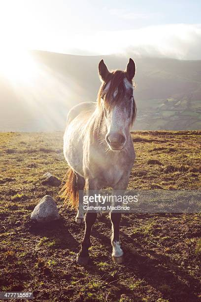Wild Horse on Wicklow Mountains