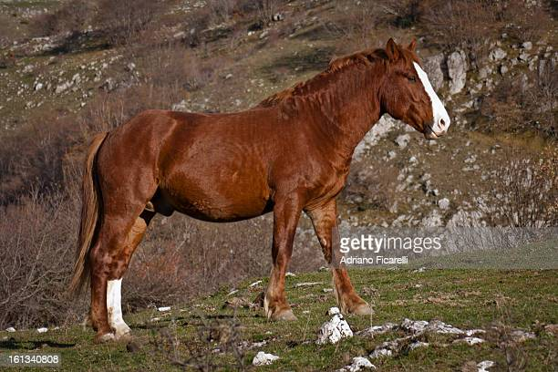 wild horse - adriano ficarelli stock pictures, royalty-free photos & images