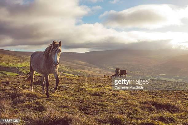 wild horse - catherine macbride foto e immagini stock